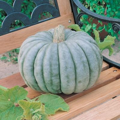 ジャイアントジャラーデールパンプキン(ジャイアントブルーパンプキン)の種子