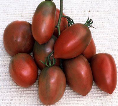 ウクラニアンパープルトマトの種子