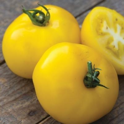 サニーボーイハイブリッドトマトの種子