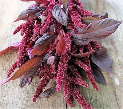 レッドアーミーアマランサスの種子