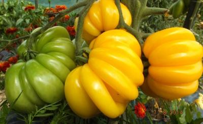 フローレンティンビューティートマトの種子