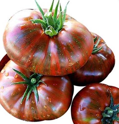 チョコレートストライプトマトの種子