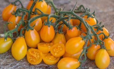 サブマリンブラッシュトマトの種子