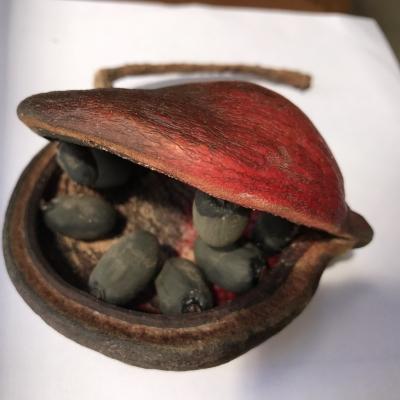 ヤツデアオギリ(ジャワオリーブ)