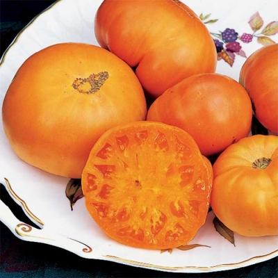 アマナオレンジトマトの種子