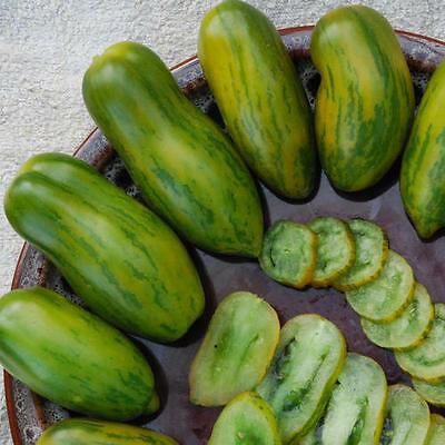 グリーンソーセージトマトの種子