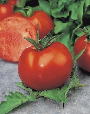 モンテカルロトマトの種子