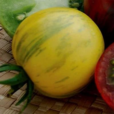 イエローベルニサージュトマト