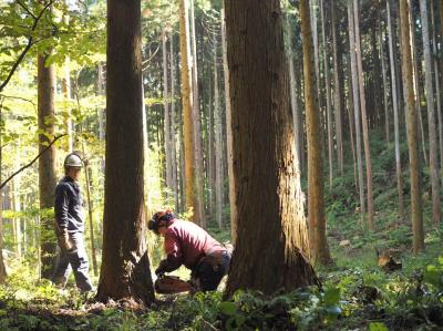 ■南三陸町の森で伐採作業の様子。