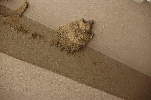 コシアカツバメの巣