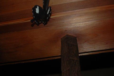 玄関の蝶 3