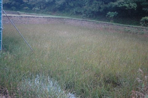 蚊帳つり草の池