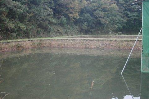水の溜まった池
