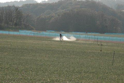 ラッキョウ畑 4