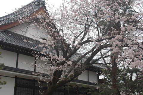 花見公園と浄宗寺