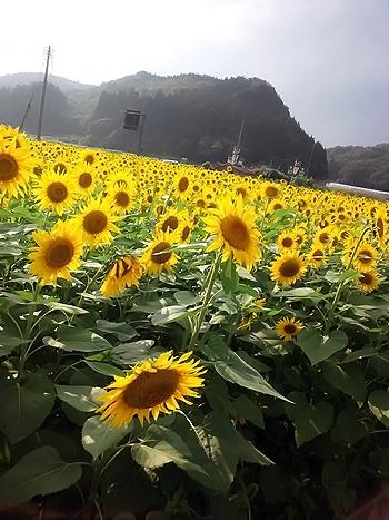 鳥取砂丘と向日葵畑で過ごす夏休み