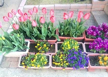 自宅の庭に咲いた春のお花♪