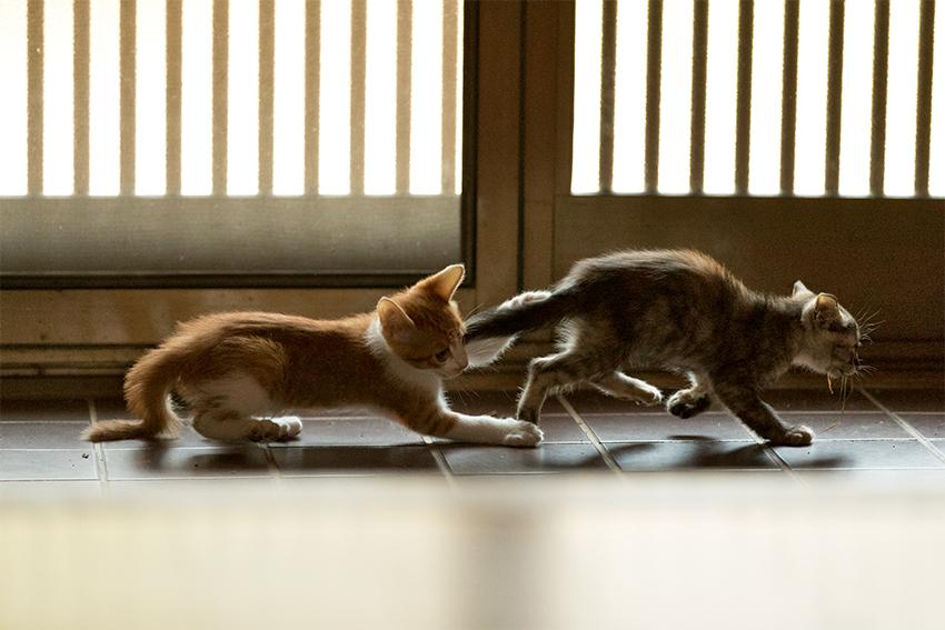 ED6I4035 遊ぶ猫1−1.jpg