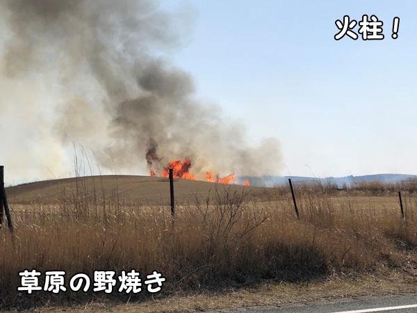 熊本県大観峰の野焼き_炎