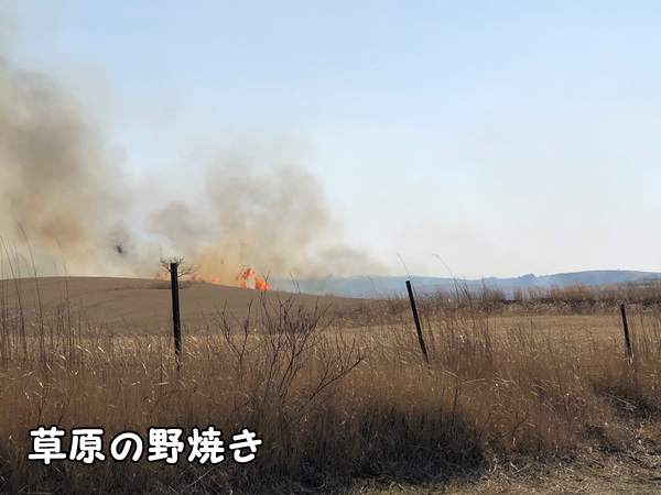 熊本県大観峰の野焼き