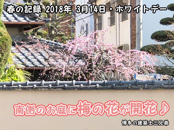 春の記録2018年3月14日・ホワイトデー・梅の花