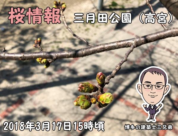 桜情報_三月田公園_福岡市高宮1丁目10