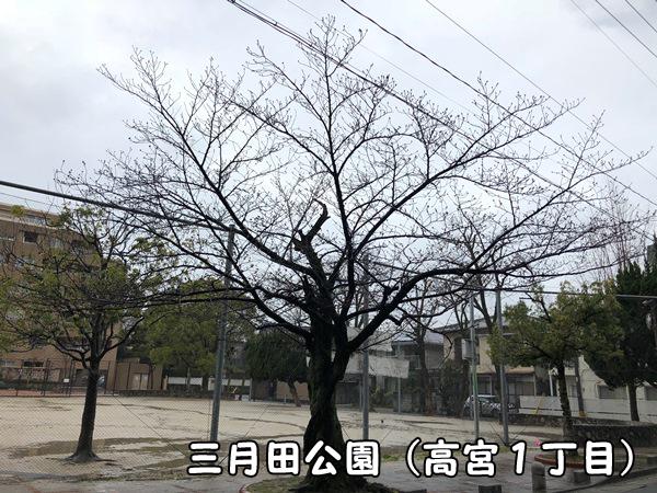 桜情報三月田公園(福岡市南区高宮)
