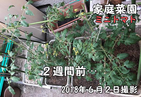 家庭菜園_ミニトマト_花