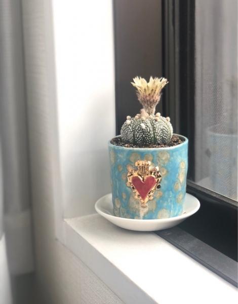 サボテン花画像