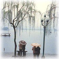 蘇堤雨風景