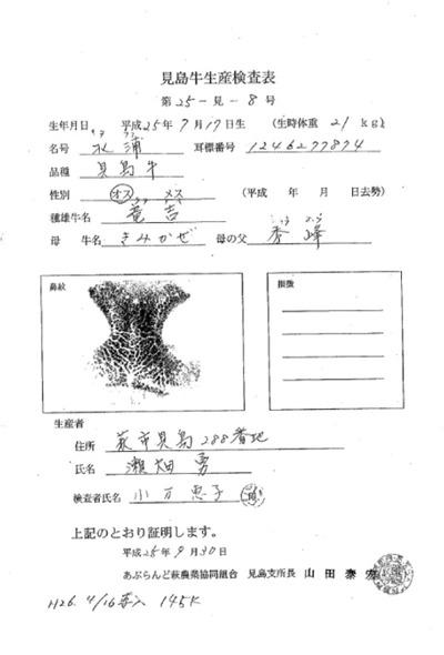 2014見島牛A.jpg