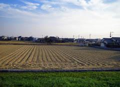 大野島の田んぼ。