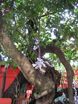七種寄生木(ななくさのやどりぎ)