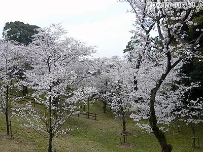 田代公園-1