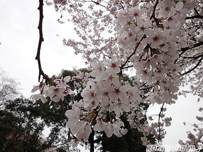 桜-4.jpg