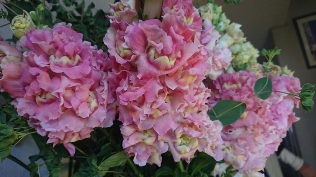 長崎の花2