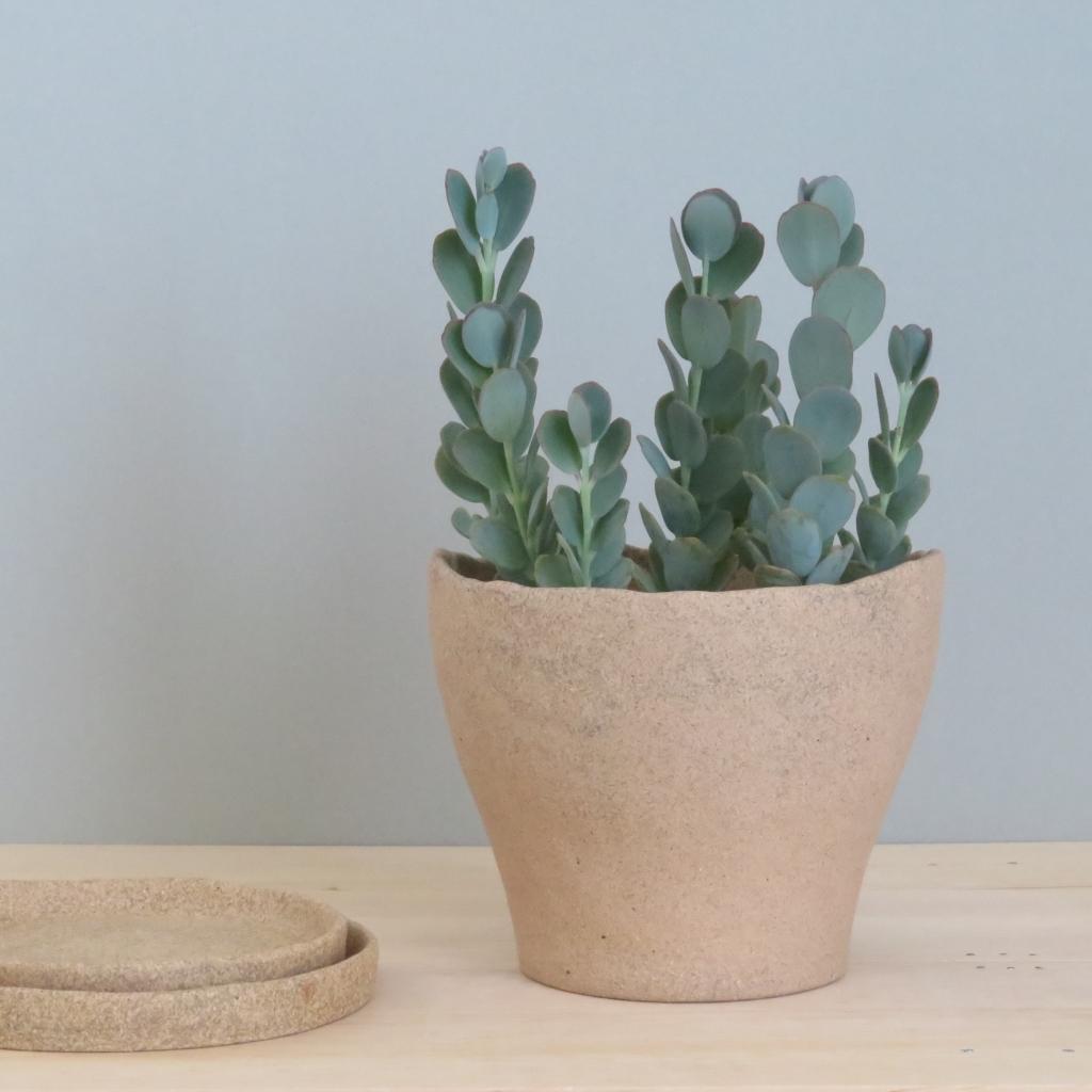 シマ窯 植木鉢 多肉植物