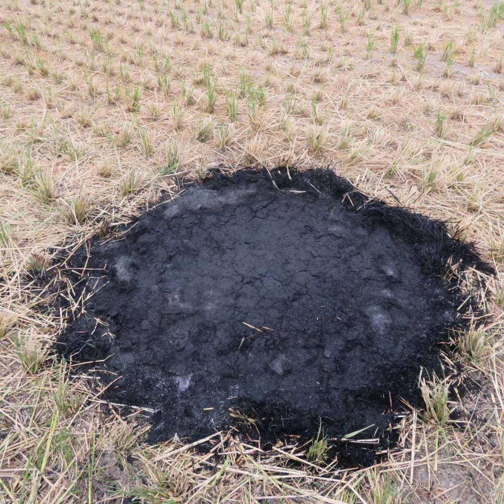 シマ窯 藁の灰づくり