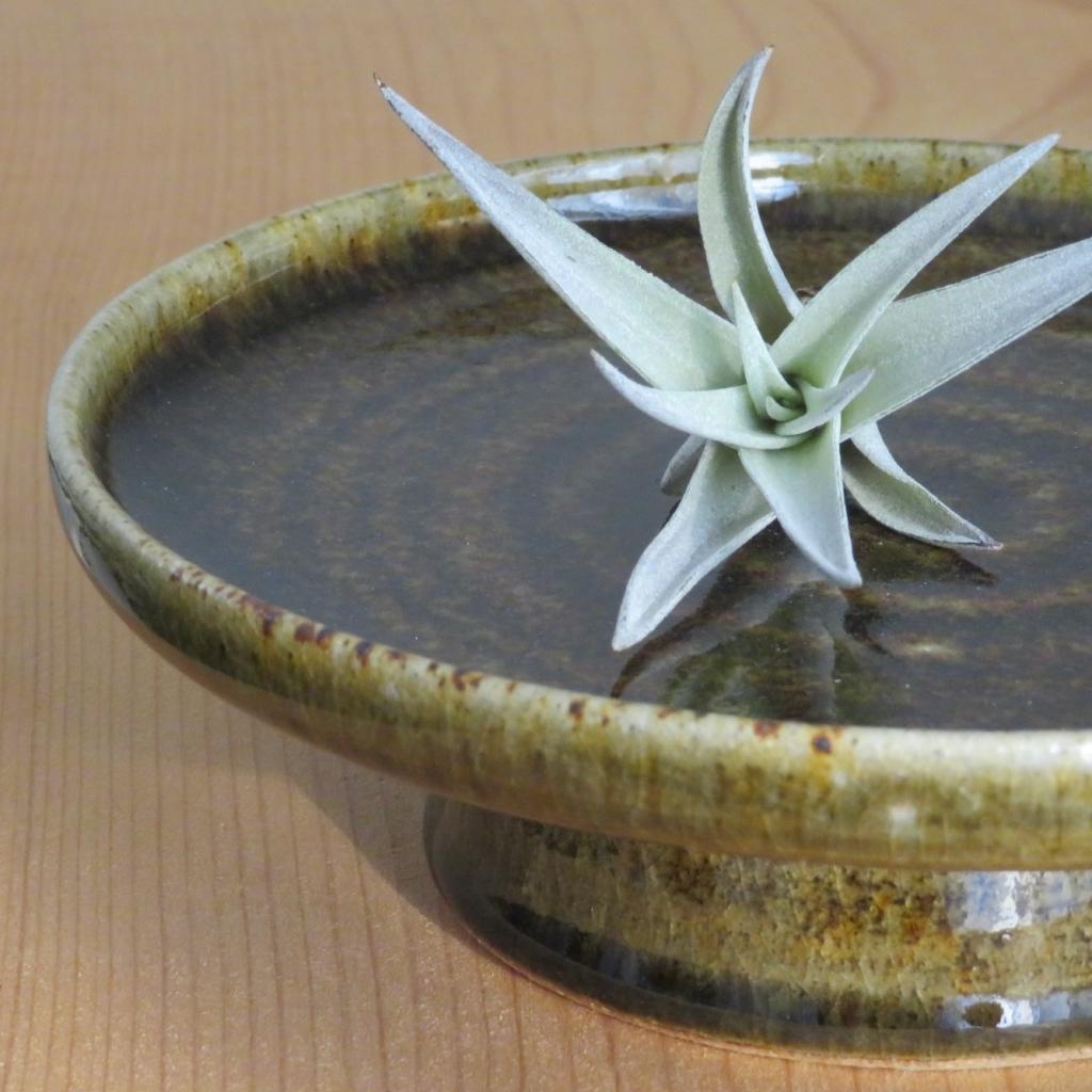 シマ窯 台皿 エアプランツ