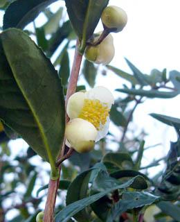 凍てつく風に揺れる花