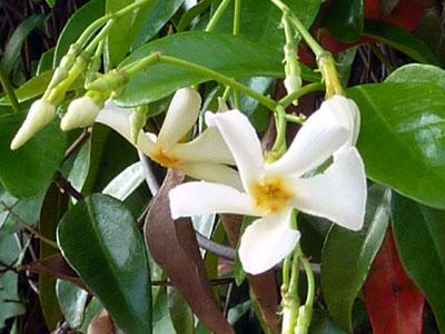 白い花びらが回りだしそう