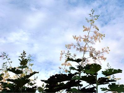 高く伸びる竹似草
