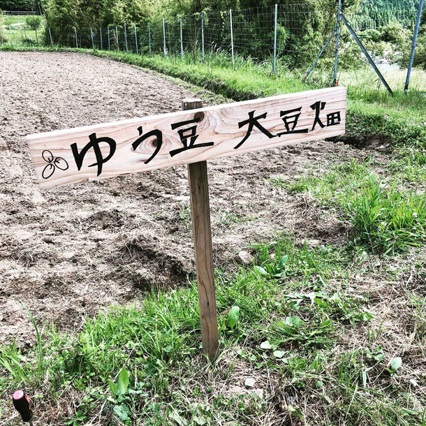 ゆう豆大豆畑