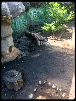 22.mar.zoo-5.jpg