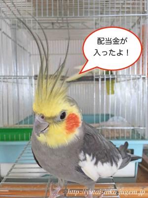 配当金(日本株)