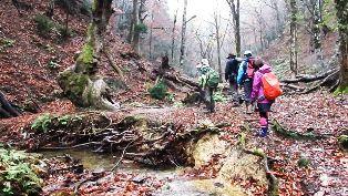 芦生の森トレッキングツアー
