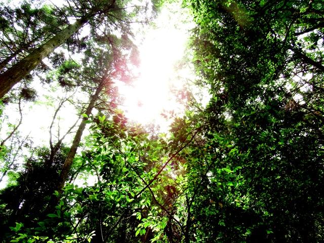 中山寺の水場の木漏れ日