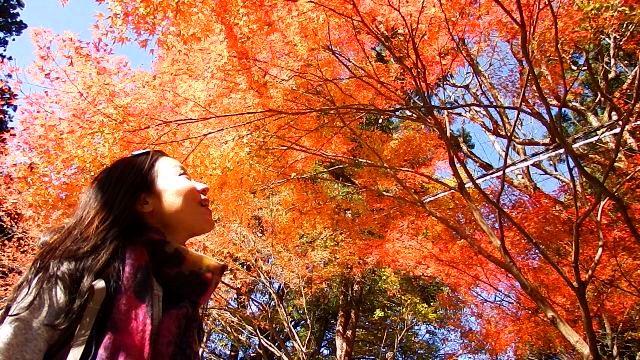 今熊野観音寺の紅葉