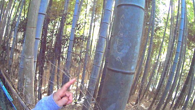外国人観光客に傷つけられている竹林の竹