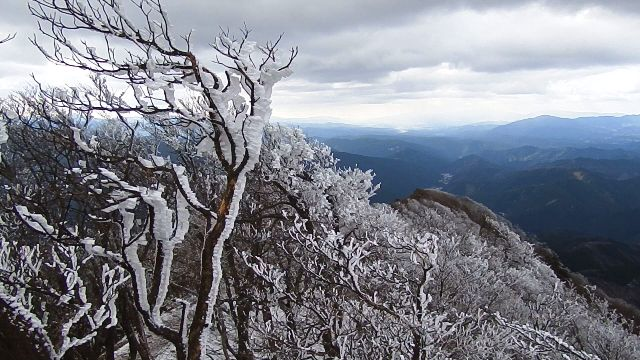 高見山の霧氷